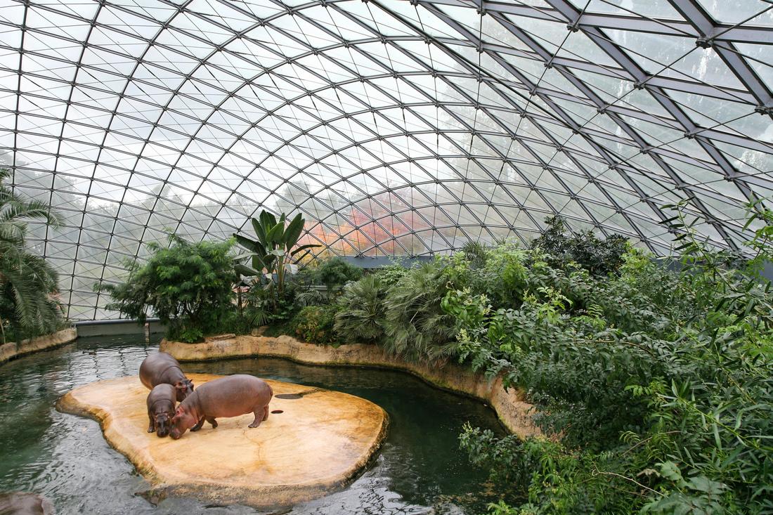 Zoo-Flusspferdhaus_Dach_06_Foto_Griesbach_a